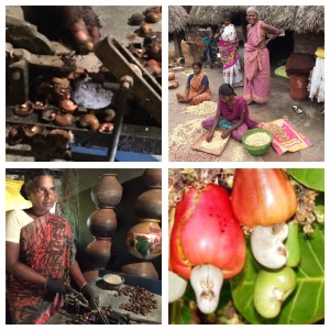 Cashew nut and family business