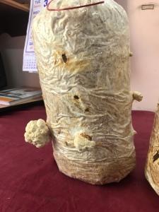 The mushroom bag